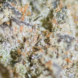 dreamsicle gelato by jelly cannabis co strain review by bigwhiteash