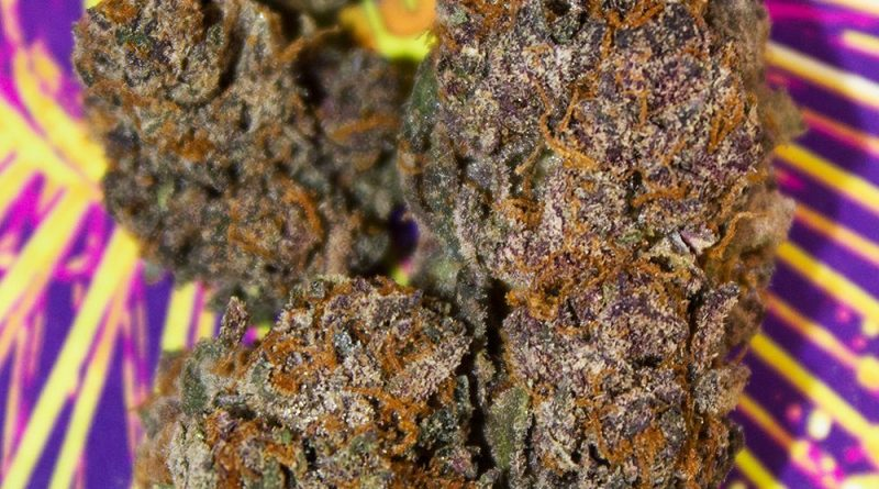 four one five by jelly cannabis co strain review by bigwhiteash