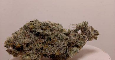 gmo by rose bud growers strain review by pdxstoneman