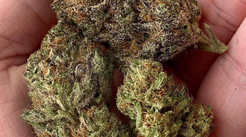 kimbo kush by billo premium cannabis strain review by austnpickett