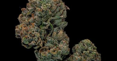 la kush cake by seed junky genetics strain review by cannabisseur604