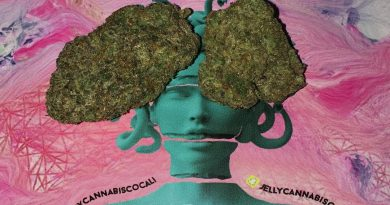 the other sister strain tos strain by jelly cannabis co strain review by boofbusters420