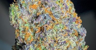 black gushers by gas no brakes strain review by budfinderdc