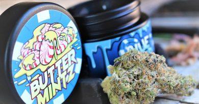 butter mintz by blue chip genetics strain review by cannasaurus_rex_reviews