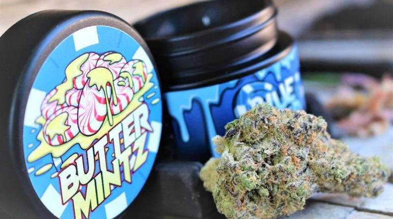 butter mintz by blue chip genetics strain review by cannasaurus_rex_reviews