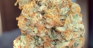 mandarin cookies by district florist strain review by budfinderdc