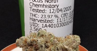 pot roast by focus north strain review by pdxstoneman