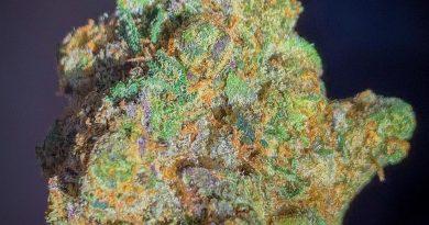sherbhead by vapackboyz strain review by budfinderdc