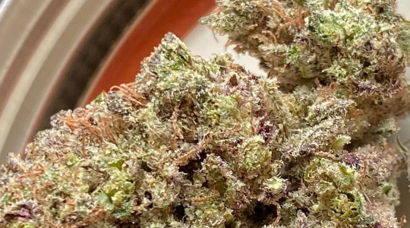 curacao og by afro genetics strain review by jean_roulin_420
