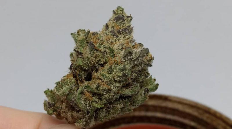don mega by rosebud growers strain review by pdxstoneman