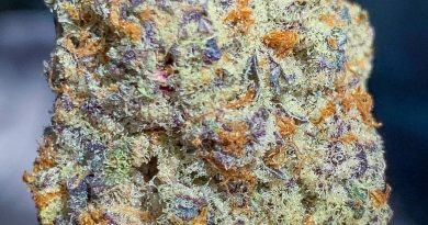 fidel's oreoz by gas no brakes strain review by budfinderdc