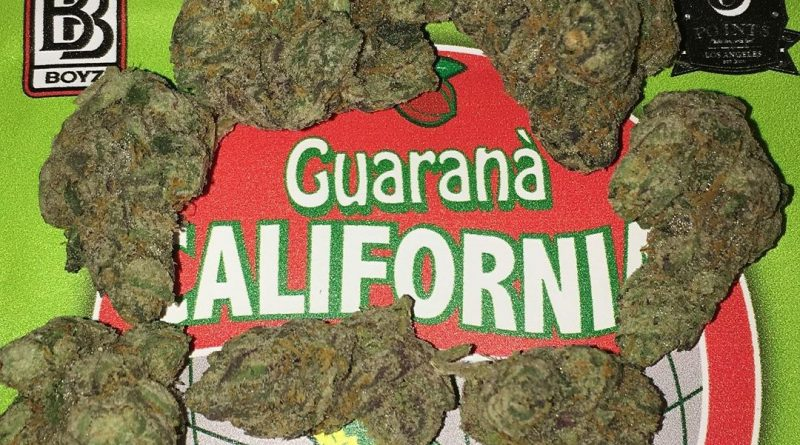 guarana by backpack boyz strain review by boofbusters420