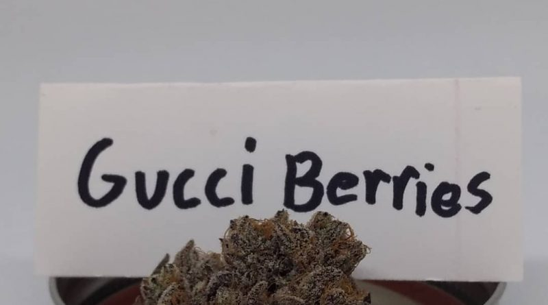 gucci berries by doghouse strain review by pdxstoneman
