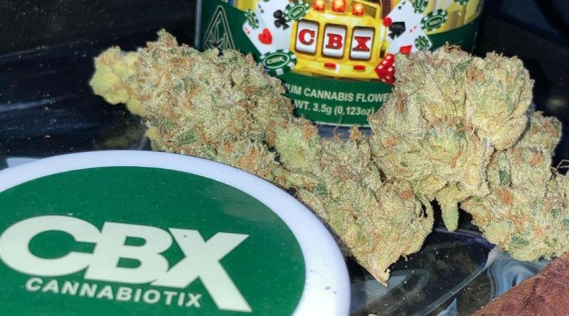 casino kush by cannabiotix strain review by sjweed.review