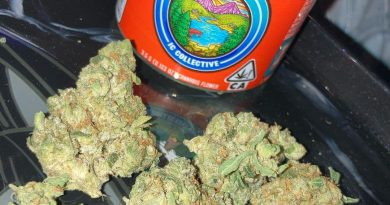 t.i.t.s. strain by ic collective strain review by sjweed.review
