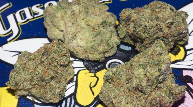 gasolina de miel by backpack boyz strain review by bigwhiteash