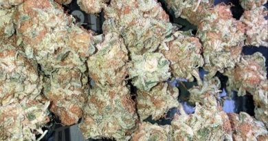 gelato punch by bobby mac strain review by sjweed.review