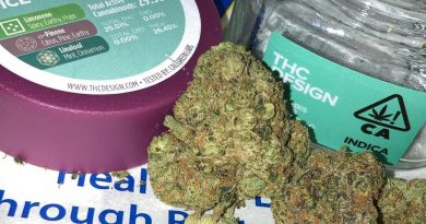 ice cream cake by thc design strain review by sjweed.review