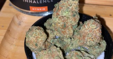 lava cake by inhalence strain review by trunorcal420
