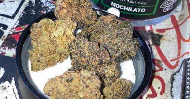 mochilato by stiiizy strain review by sjweed.review