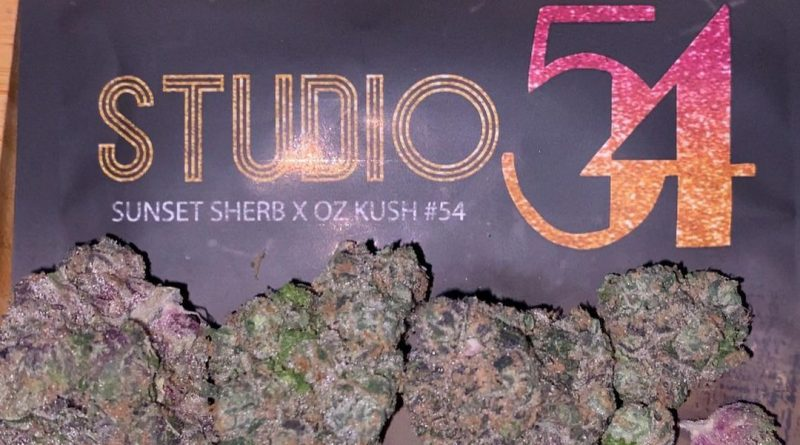 studio 54 by doja exclusive strain review by trunorcal420