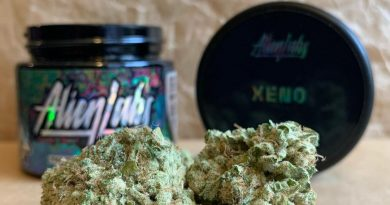 xeno by alien labs strain review by christianlovescannabis
