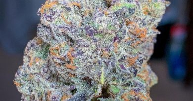 apple fritter by dynasty collective strain review by budfinderdc