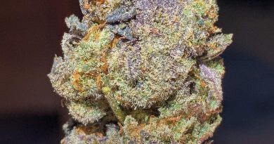 black caviar by gas no brakes strain review by budfinderdc