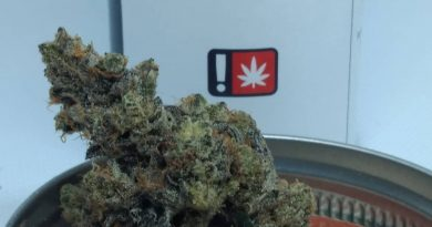 cookie dawg by pintail gardens strain review by pdxstoneman