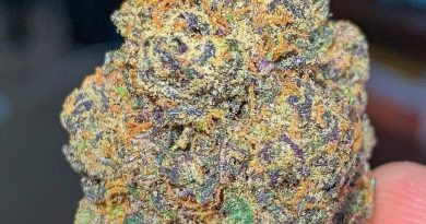 eye-5 by sf canna strain review by budfinderdc