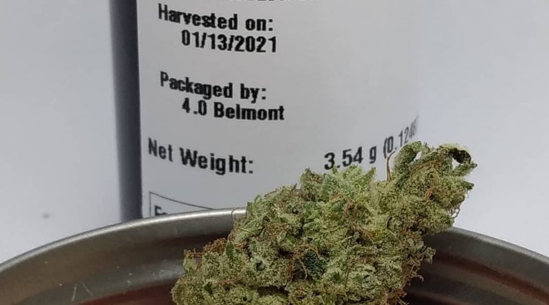 flatbrainer by high noon cultivation strain review by pdxstoneman