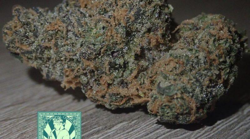 gelato 41 by medicinalweed_420 strain review by the_originalcannaseur