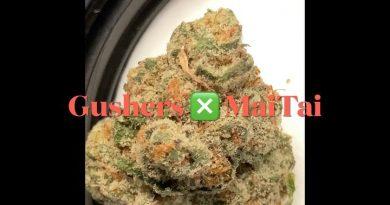gushers x mai tai strain review by sjweedreview