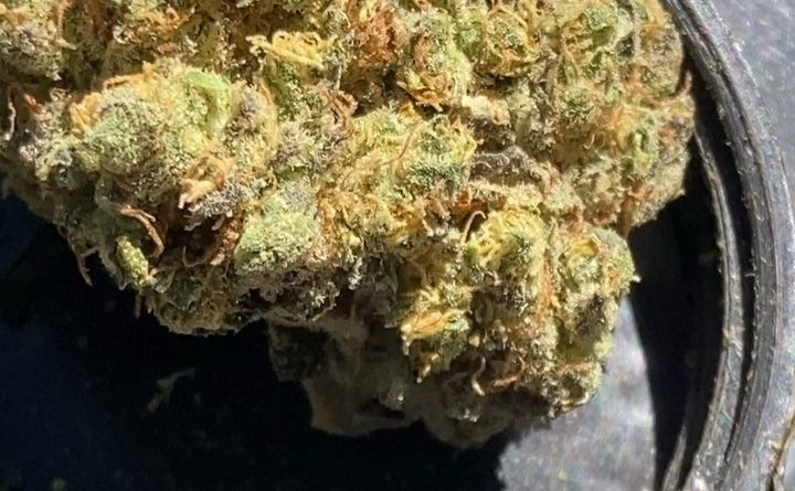 l.p.c. by elev8ted grower strain review by sjweedreview