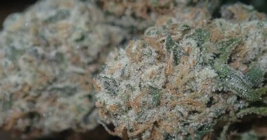 la kush cake by cannarian terpz strain review by the_originalcannaseur
