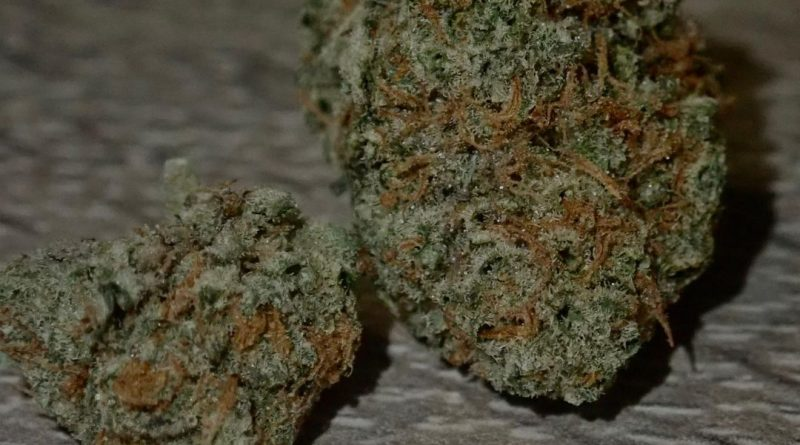 stardawg from terpanese strain review by the_originalcannaseur