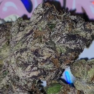pink pastry's by pastry's strain review by trunorcal420