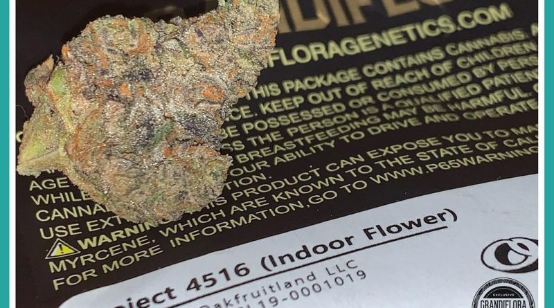 project 4516 by oakfruitland strain review by the_originalcannaseur