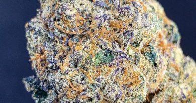 dosi runtz by zugatti strain review by budfinderdc