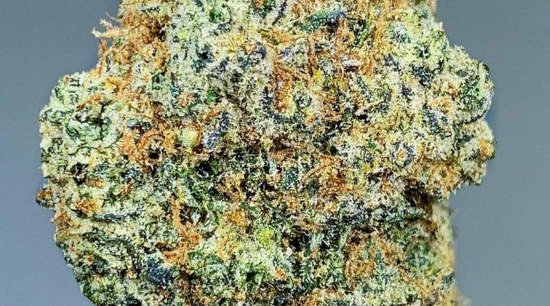 white runtz by gas no brakes strain review by budfinderdc