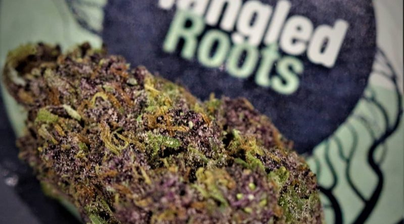 whitethorn rose by huckleberry hill farms strain review by cannasaurus_rex_reviews