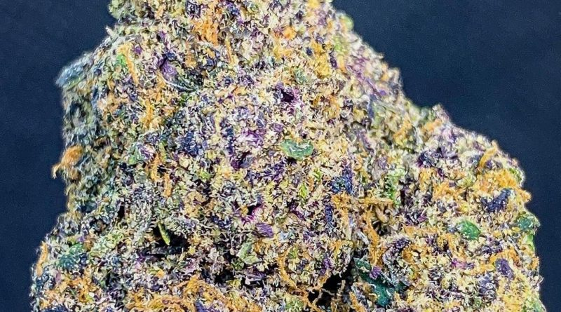 zerbert from flower bomb dc strain review by budfinderdc