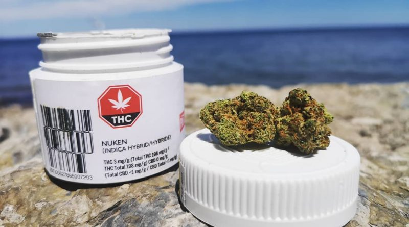 nuken by palmetto cannabis strain review by terple grapes