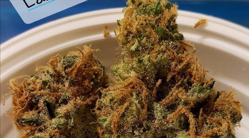 lashkar gah 99a9 by prime wellness of pa strain review by yourhostnoah