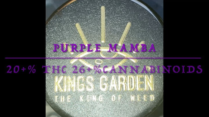 purple mamba by kings garden strain review by sjweedreview
